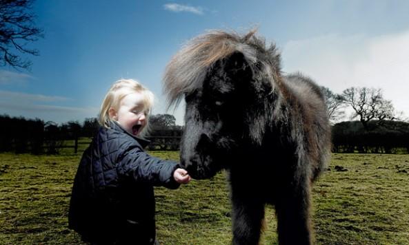 shetland-pony_1746950i