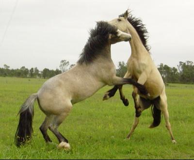 horsesjump