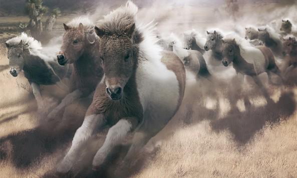 Mini-Cooper-S-Ponies