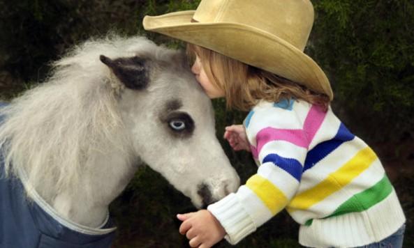 tiny-horse_1952837i