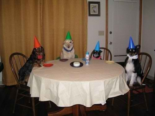 dog_birthday_party