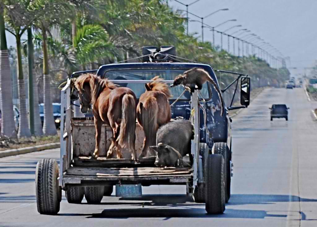 horses-pigs-and-tejon1-1024x736