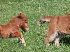 foals_12_2_brittany