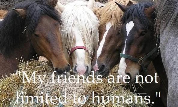 horsefriendsusbzoso