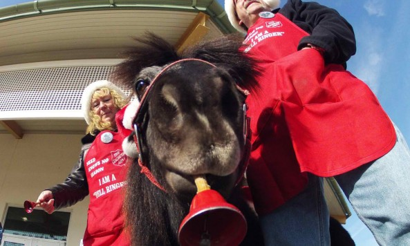 tinkersalvationarmyminihorse2012