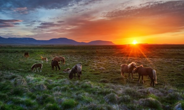Trey Ratcliff - A Tableau Vivant of Horses in Iceland