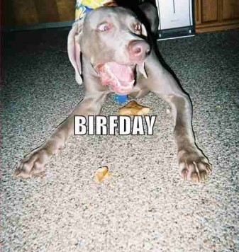 best-birthday-ever-337x500