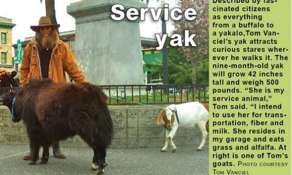 serviceyaksteve