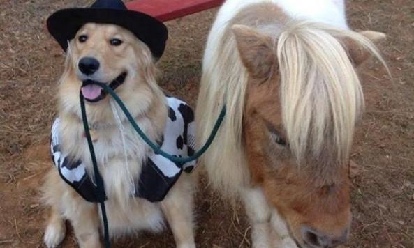 cowboydogminipony
