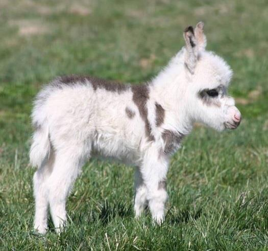 Mini Pony Of The Day 11 21 13 P S A M P