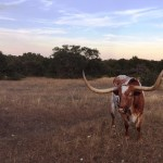 BEVO-shoot