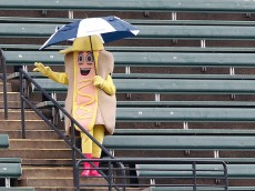 CLEVELAND, OH - AUGUST 14:  A hot dog mustard mascot dances in the bleachers during a rain delay before the game between the Cleveland Indians and the Los Angeles Angels of Anaheim at Progressive Field on August 14, 2016 in Cleveland, Ohio. (Photo by David Maxwell/Getty Images)